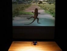 이화여대 자연사박물관   생물의 방어